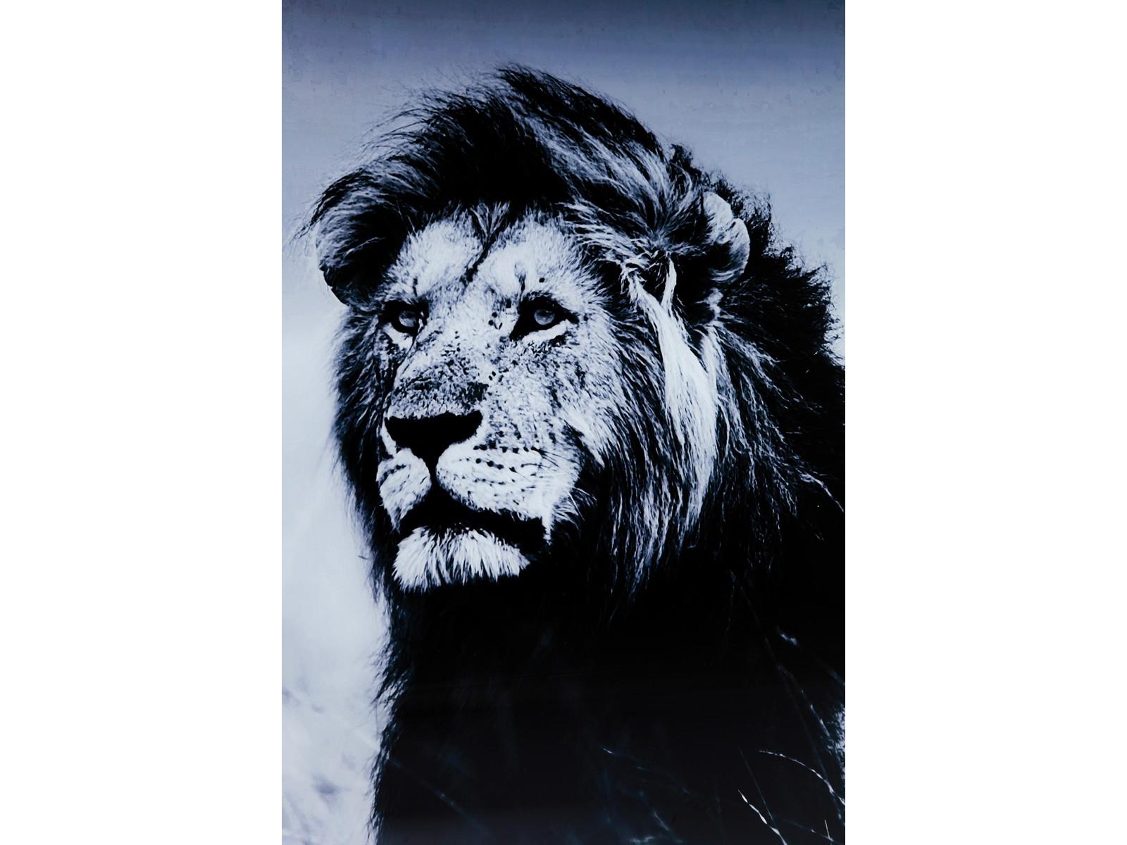 Tableau en Verre Lion King Standing 120x160cm Kare Design