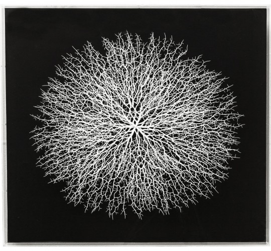 Cadre décoratif Vascular noir 90x90cm Kare Design
