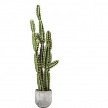 Plante décorative Cactus Pot 202cm Kare Design