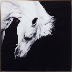 Tableau Frame Proud Horse cheval 100x100cm Kare Design