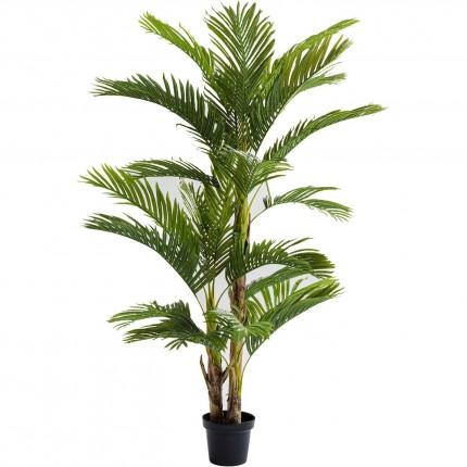 Plante décorative Palmier 190cm Kare Design