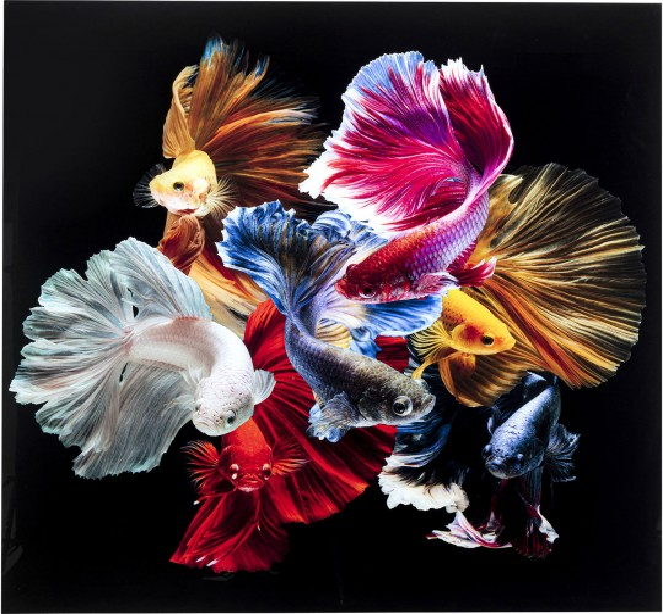 Tableau en verre Colorful Swarm Fish 120x120cm Kare Design