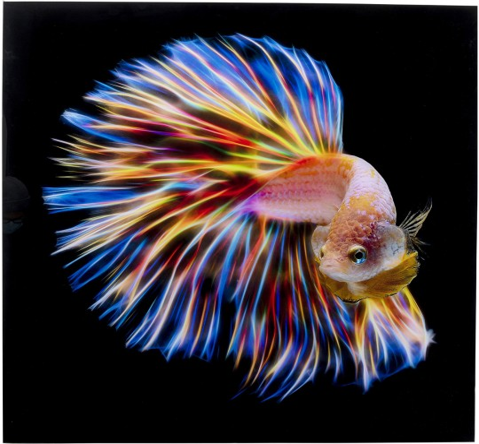 Tableau en verre poisson arc-en-ciel 100x100cm Kare Design